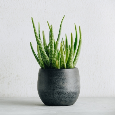 16 plants to improve health and wellbeing for your wedding