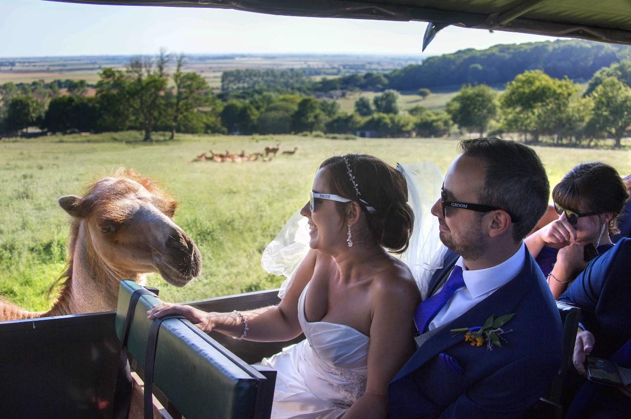 Bride and groom on safari