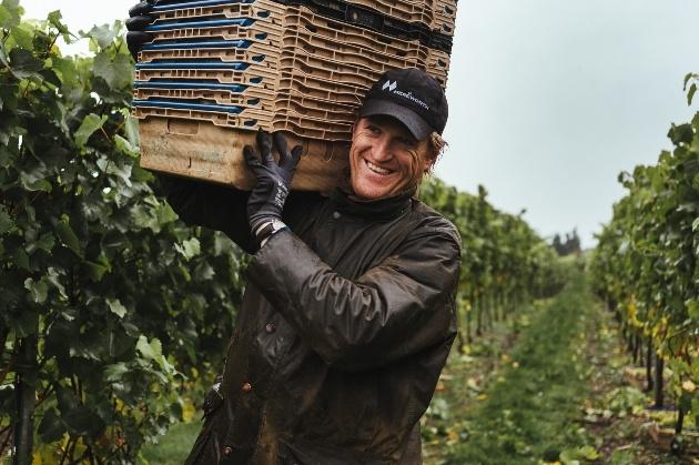 smiling man carry crates through mereworth wines' vineyard