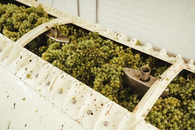grapes being crushed in a machine to be made into wine